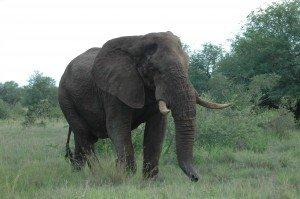 south Africa ! dsc_33561-300x199
