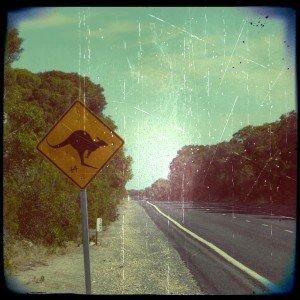 l'Australie ! p1020351_aladin_focal_hassel-300x300